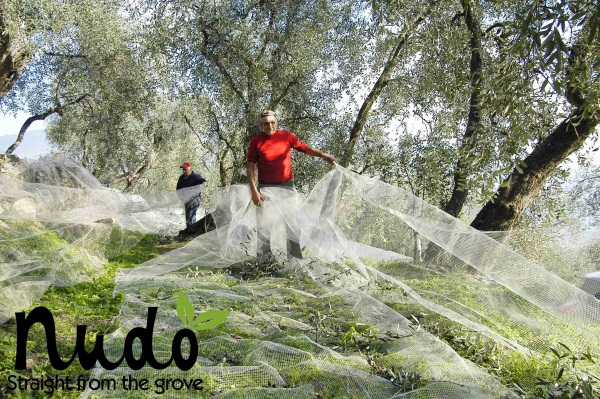 Adopt an olive tree with Nudo